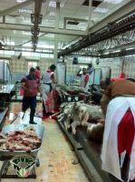 Kuwait_sheep_on_Eid1