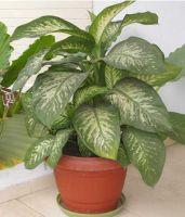 Dangerous_Plant