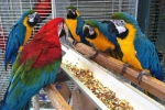Intelligent~Tamed Macaw Birds And Parrots Chicks!!